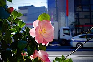 yongnuo_05.jpg